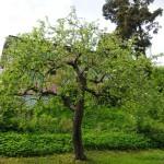 brunke_apple1